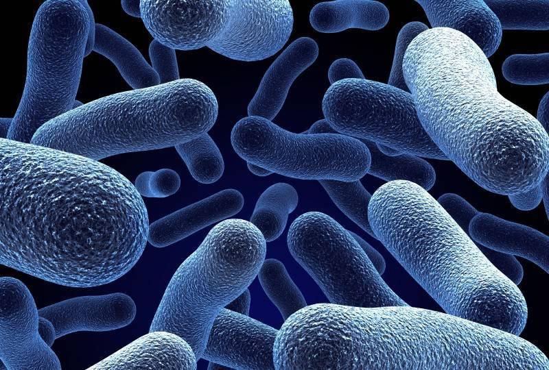 Beneficial Bacteria & Acne