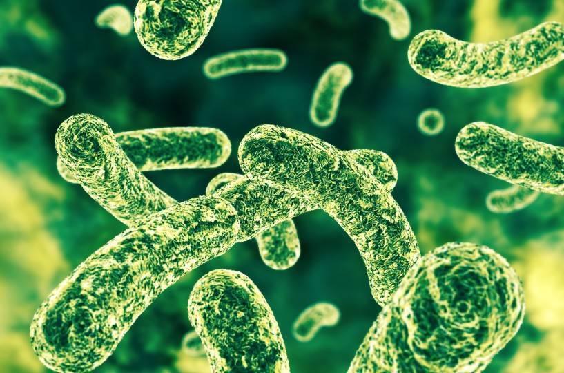 Probiotic Organisms