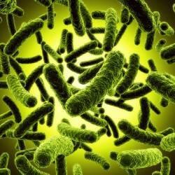 Probiotics & Weight Loss