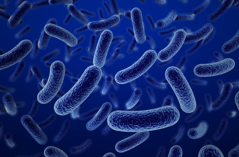 List Of Beneficial Bacteria In Food